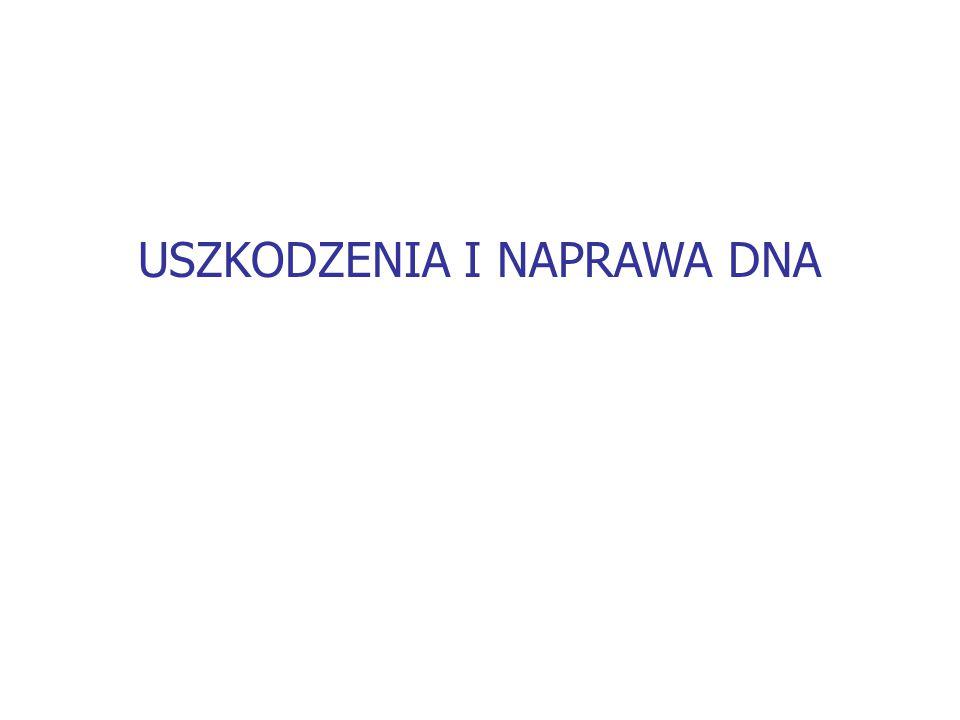 USZKODZENIA I NAPRAWA DNA
