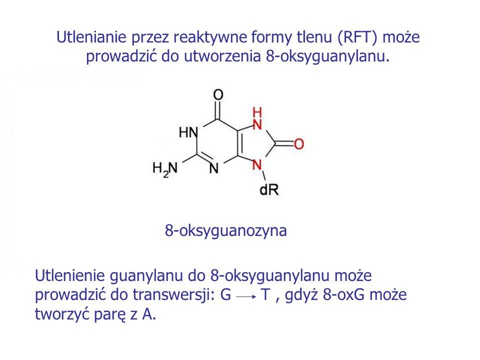 Utlenianie przez reaktywne formy tlenu (RFT) może prowadzić do utworzenia 8-oksyguanylanu.