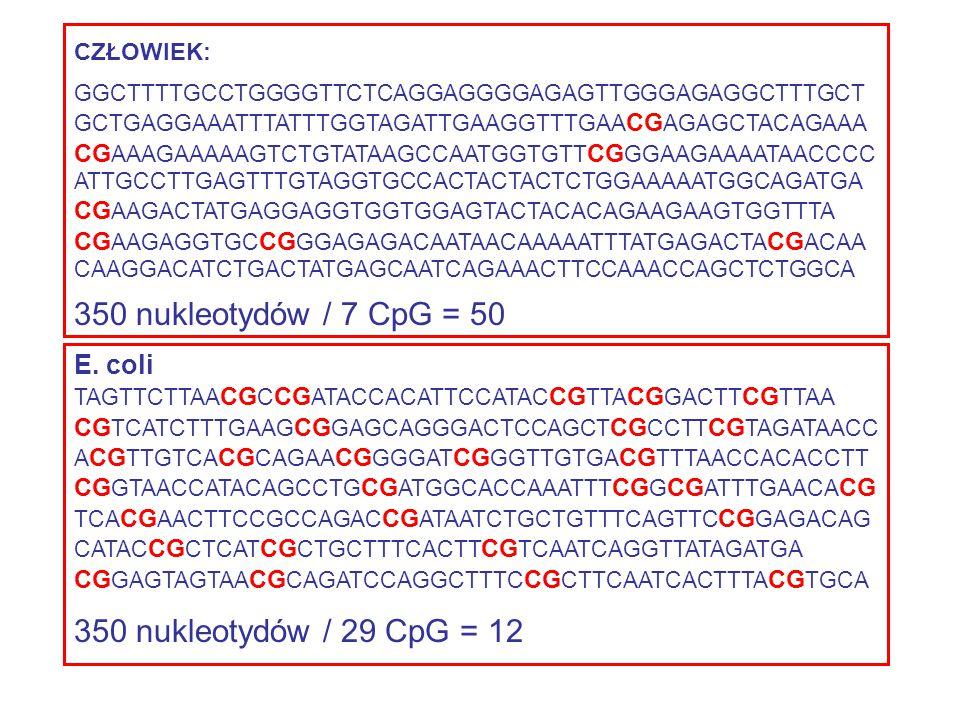 350 nukleotydów / 7 CpG = 50 350 nukleotydów / 29 CpG = 12 E. coli