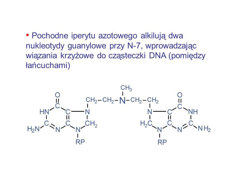 Pochodne iperytu azotowego alkilują dwa nukleotydy guanylowe przy N-7, wprowadzając wiązania krzyżowe do cząsteczki DNA (pomiędzy łańcuchami)