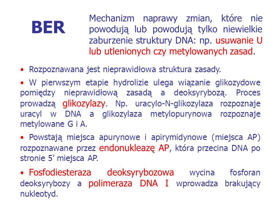 Mechanizm naprawy zmian, które nie powodują lub powodują tylko niewielkie zaburzenie struktury DNA: np. usuwanie U lub utlenionych czy metylowanych zasad.