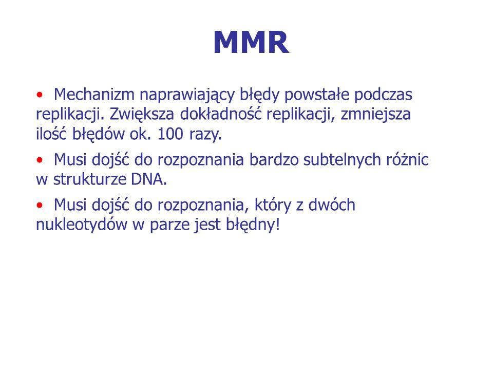 MMR Mechanizm naprawiający błędy powstałe podczas replikacji. Zwiększa dokładność replikacji, zmniejsza ilość błędów ok. 100 razy.