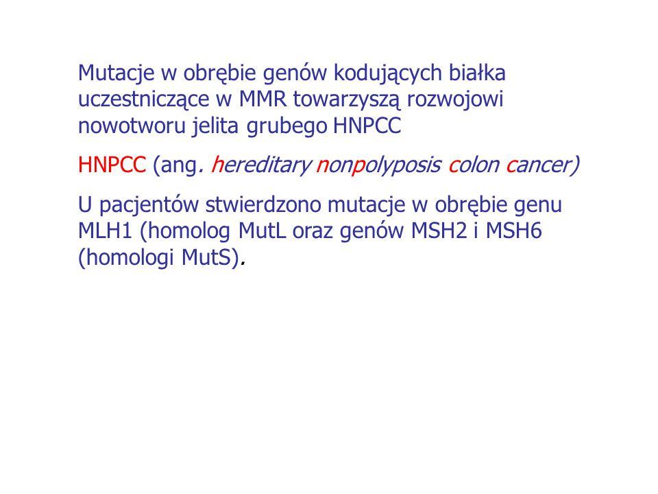 Mutacje w obrębie genów kodujących białka uczestniczące w MMR towarzyszą rozwojowi nowotworu jelita grubego HNPCC