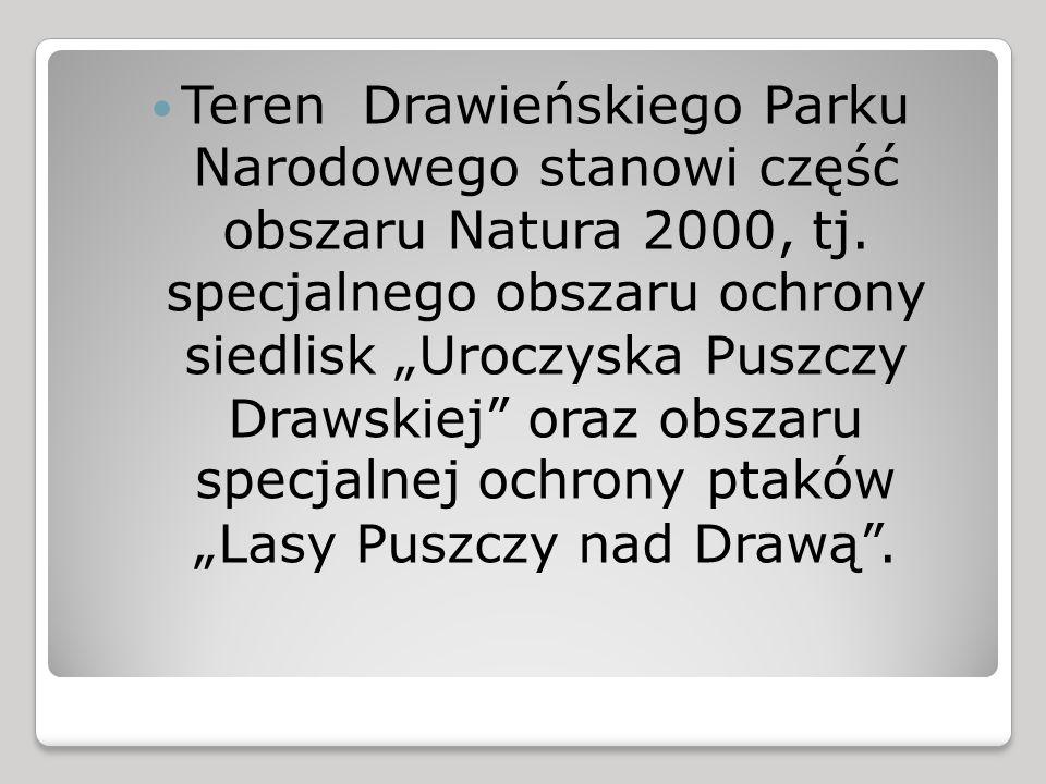 Teren Drawieńskiego Parku Narodowego stanowi część obszaru Natura 2000, tj.