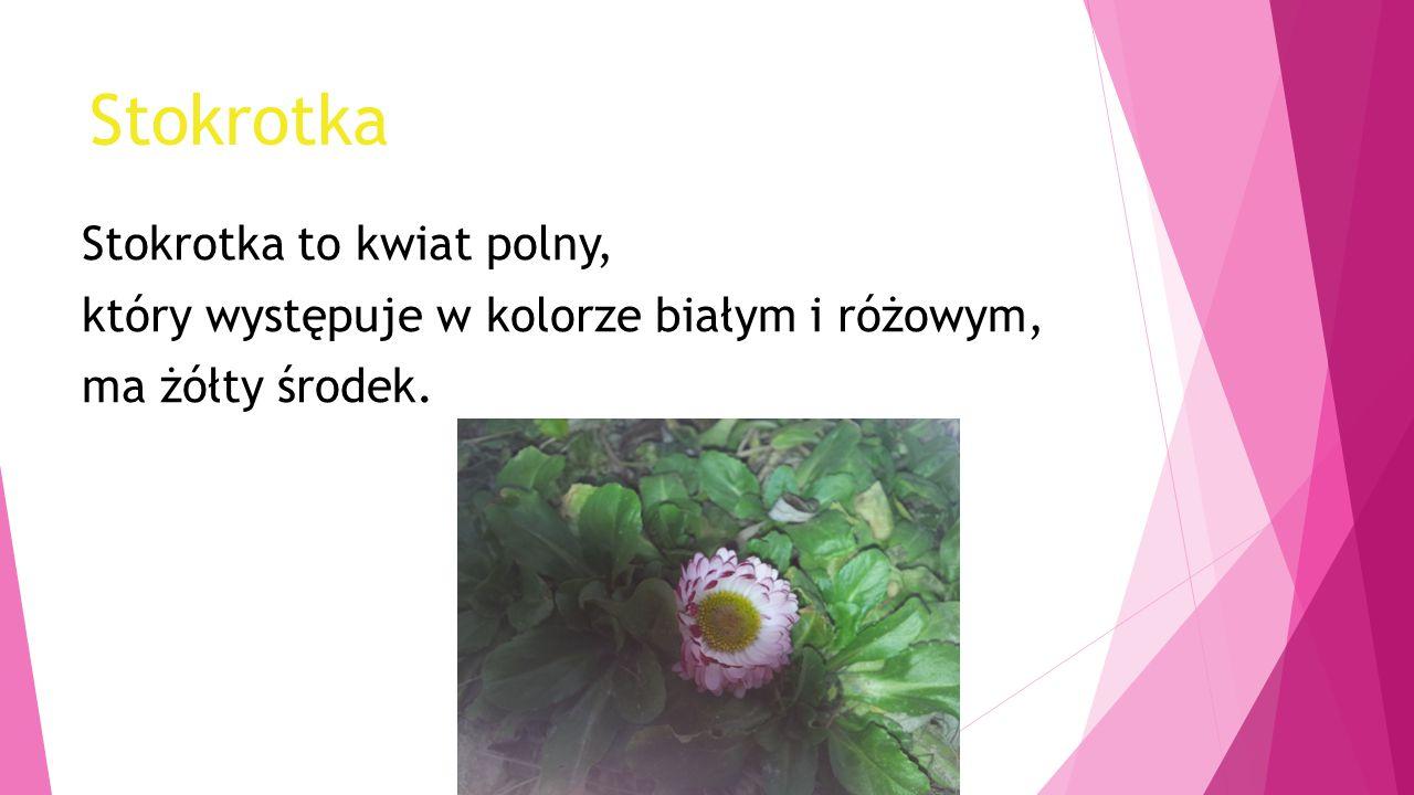 Stokrotka Stokrotka to kwiat polny, który występuje w kolorze białym i różowym, ma żółty środek.