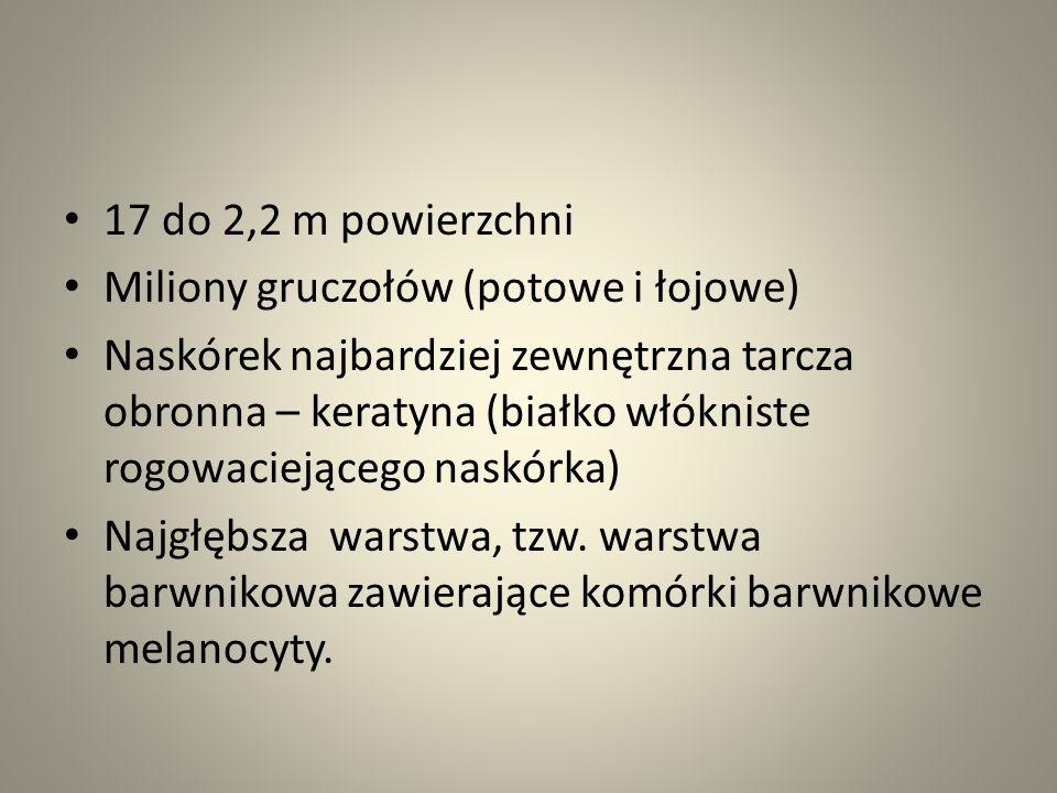 17 do 2,2 m powierzchni Miliony gruczołów (potowe i łojowe)