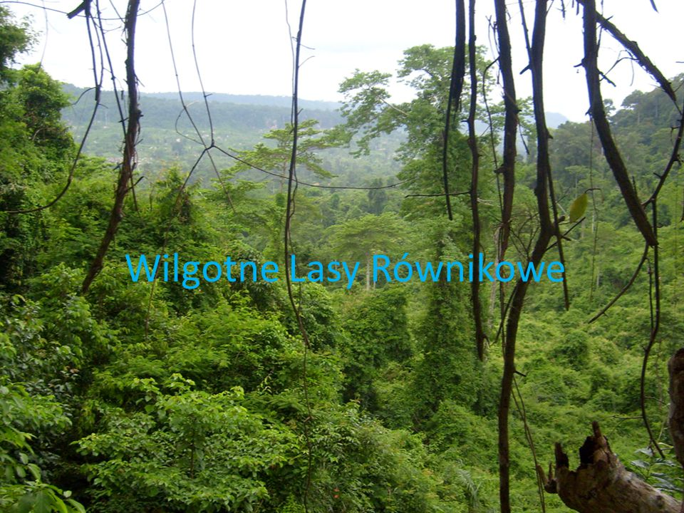 Wilgotne Lasy Równikowe