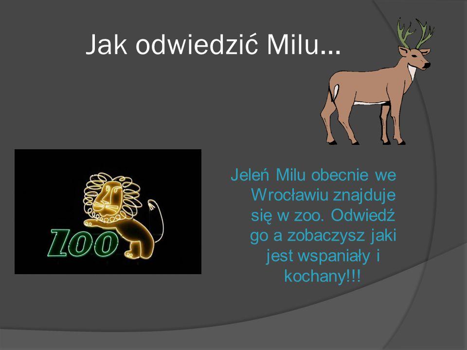 Jak odwiedzić Milu… Jeleń Milu obecnie we Wrocławiu znajduje się w zoo.