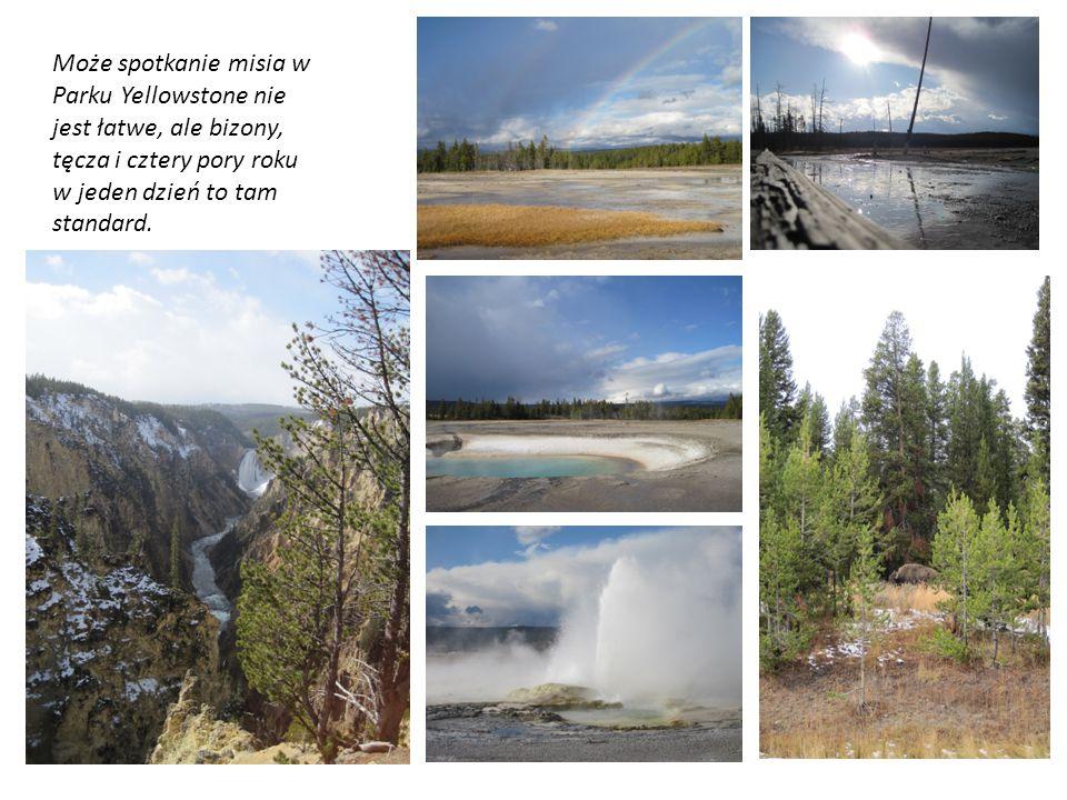 Może spotkanie misia w Parku Yellowstone nie jest łatwe, ale bizony, tęcza i cztery pory roku w jeden dzień to tam standard.