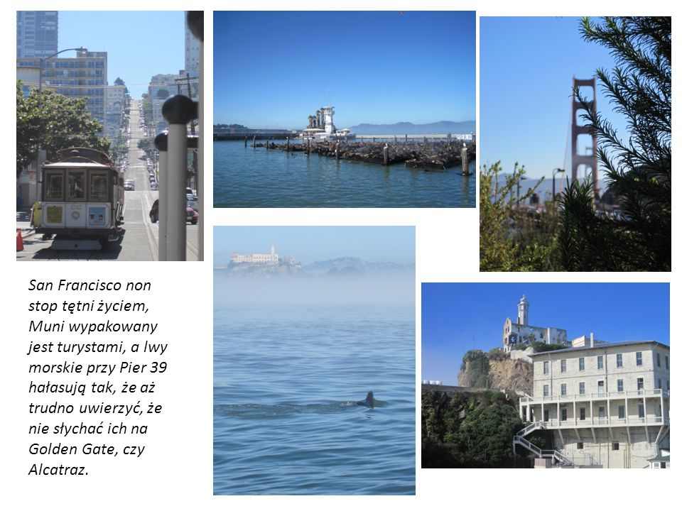San Francisco non stop tętni życiem, Muni wypakowany jest turystami, a lwy morskie przy Pier 39 hałasują tak, że aż trudno uwierzyć, że nie słychać ich na Golden Gate, czy Alcatraz.