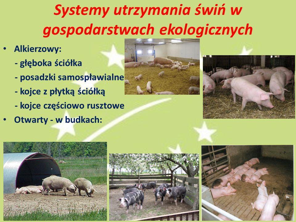 Systemy utrzymania świń w gospodarstwach ekologicznych