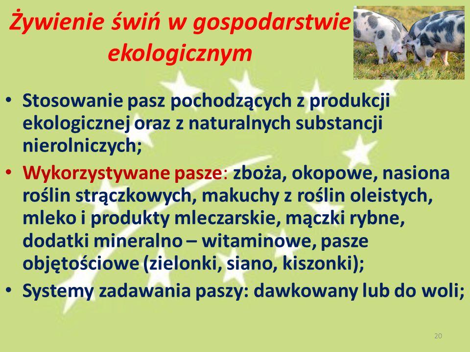 Żywienie świń w gospodarstwie ekologicznym