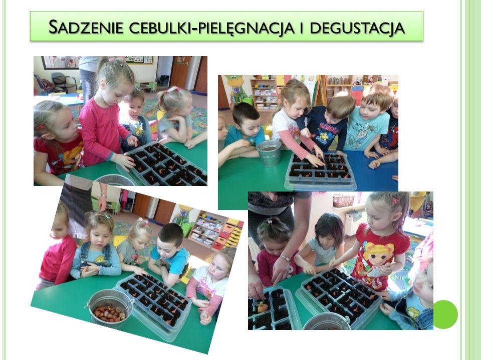 Sadzenie cebulki-pielęgnacja i degustacja