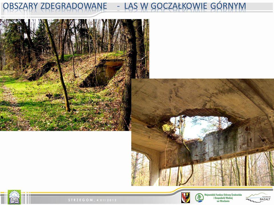 Obszary zdegradowane - Las w Goczałkowie Górnym