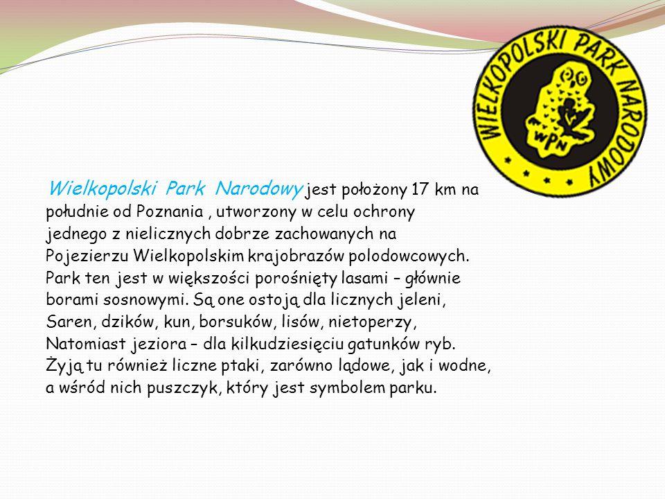 Wielkopolski Park Narodowy jest położony 17 km na
