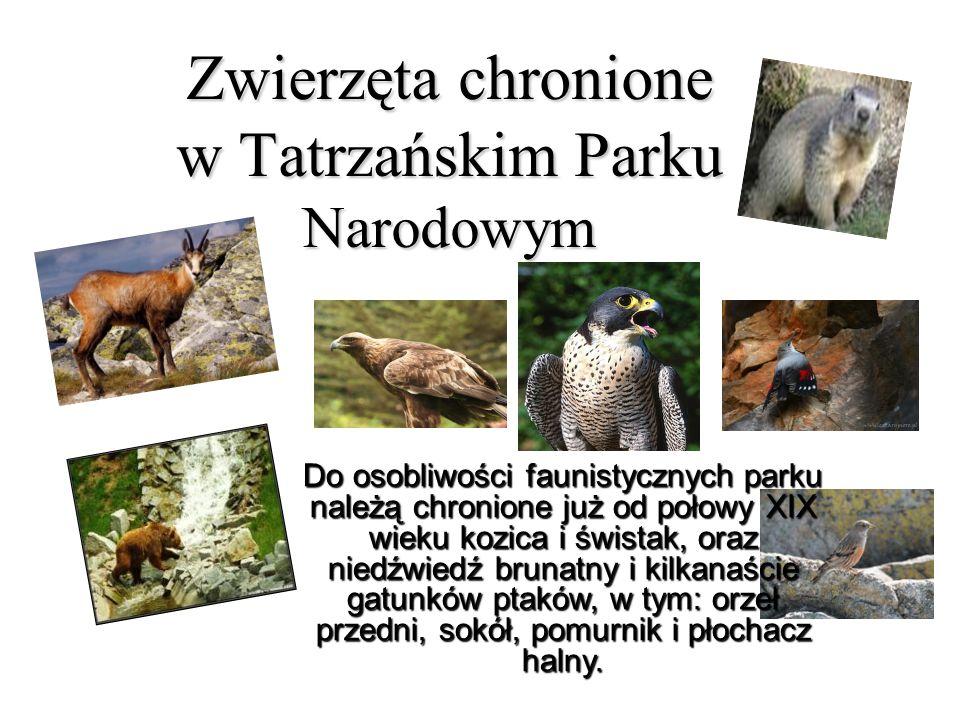 Zwierzęta chronione w Tatrzańskim Parku Narodowym