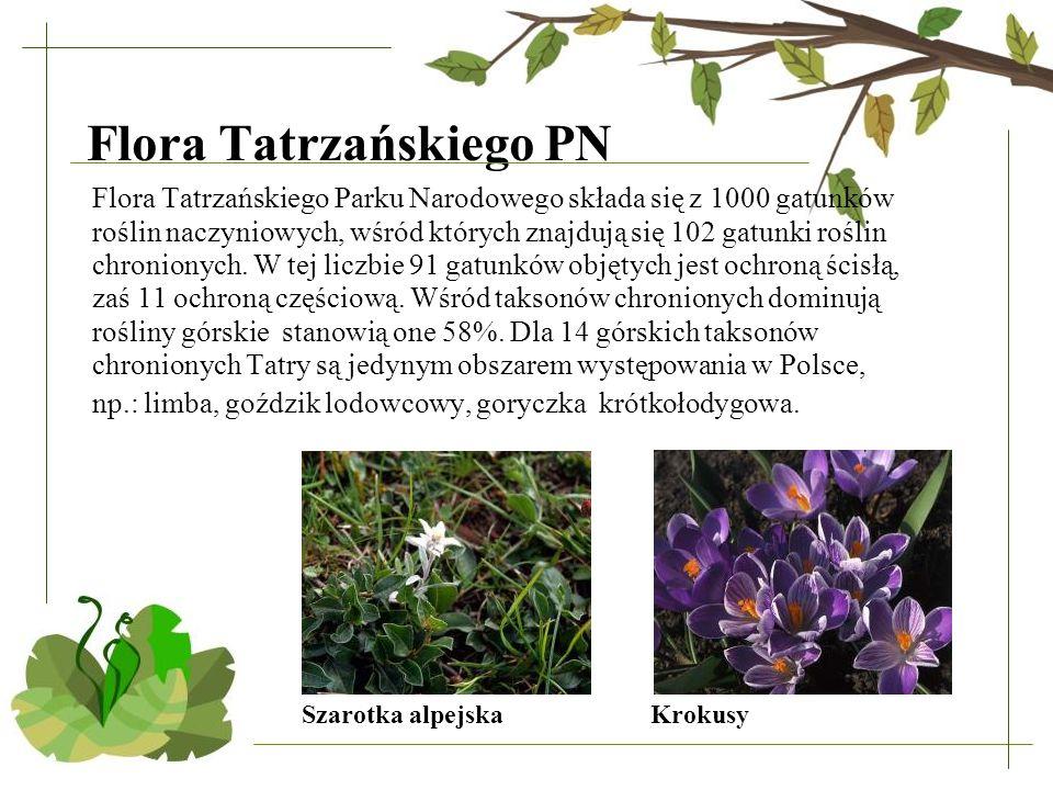Flora Tatrzańskiego PN