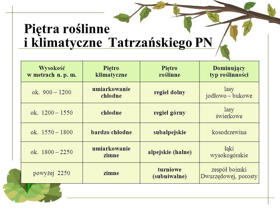 Piętra roślinne i klimatyczne Tatrzańskiego PN