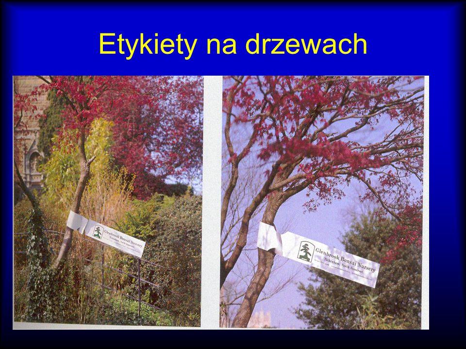 Etykiety na drzewach