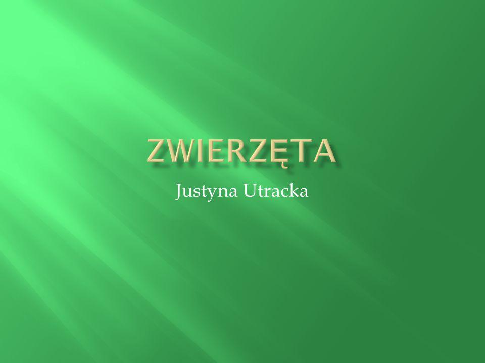 Zwierzęta Justyna Utracka