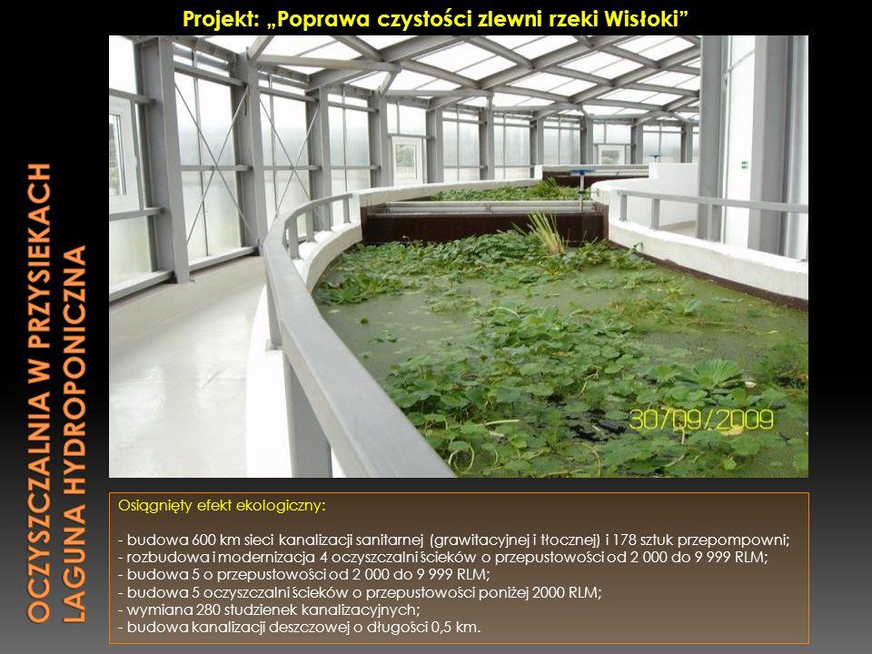 Oczyszczalnia w przysiekach Laguna hydroponiczna