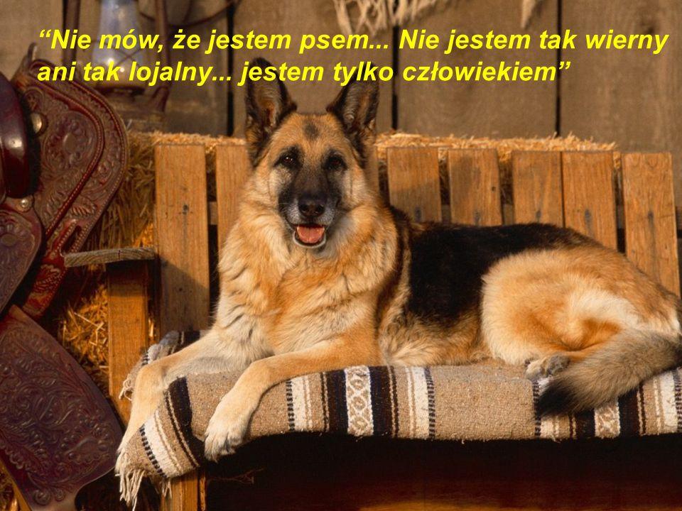 Nie mów, że jestem psem. Nie jestem tak wierny ani tak lojalny