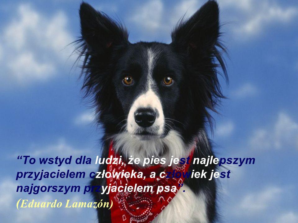 To wstyd dla ludzi, że pies jest najlepszym przyjacielem człowieka, a człowiek jest najgorszym przyjacielem psa .