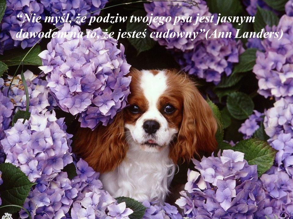 Nie myśl, że podziw twojego psa jest jasnym dowodem na to, że jesteś cudowny (Ann Landers)