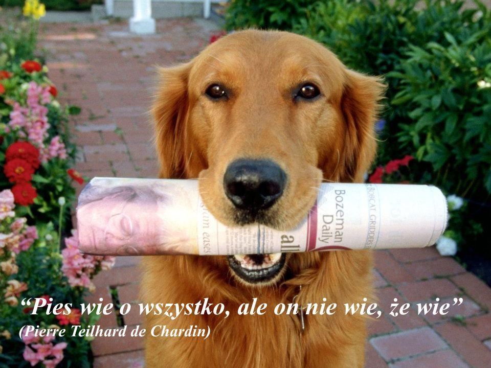 Pies wie o wszystko, ale on nie wie, że wie (Pierre Teilhard de Chardin)