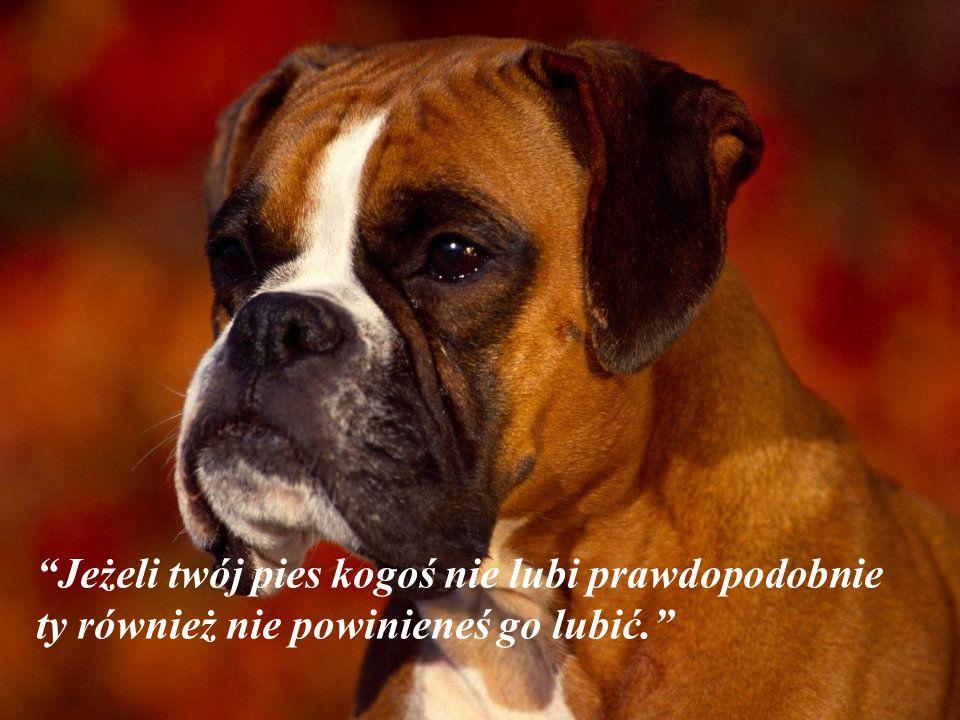 Jeżeli twój pies kogoś nie lubi prawdopodobnie ty również nie powinieneś go lubić.