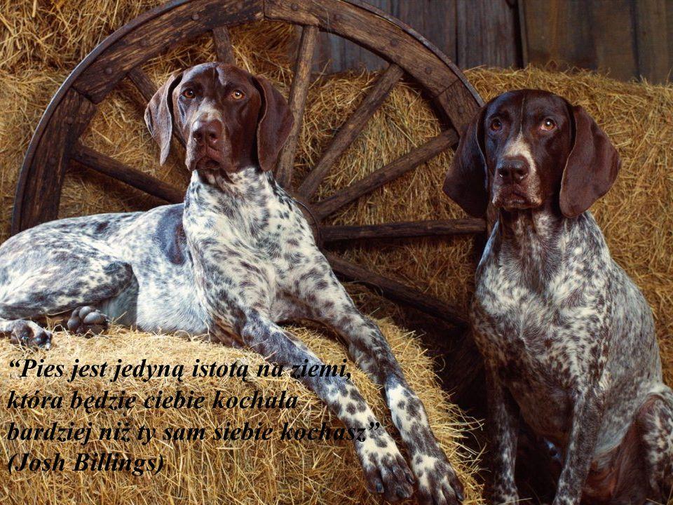 Pies jest jedyną istotą na ziemi, która będzie ciebie kochała bardziej niż ty sam siebie kochasz (Josh Billings)