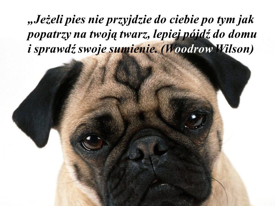 """""""Jeżeli pies nie przyjdzie do ciebie po tym jak popatrzy na twoją twarz, lepiej pójdź do domu i sprawdź swoje sumienie."""
