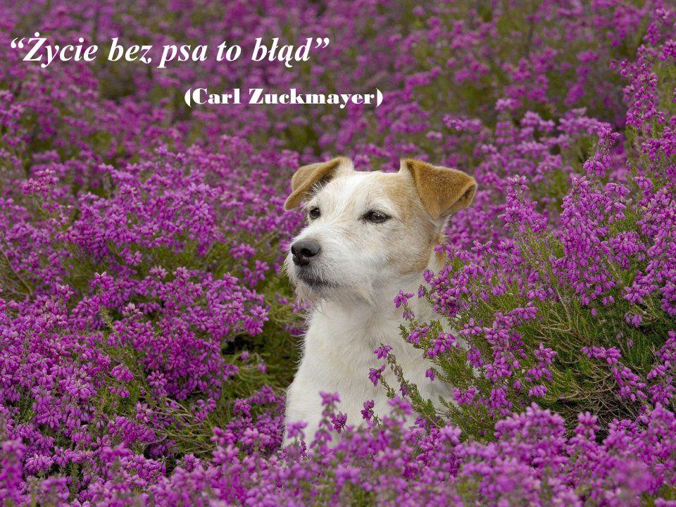 Życie bez psa to błąd (Carl Zuckmayer)