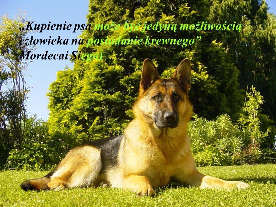 """""""Kupienie psa może być jedyną możliwością człowieka na posiadanie krewnego Mordecai Siega)"""