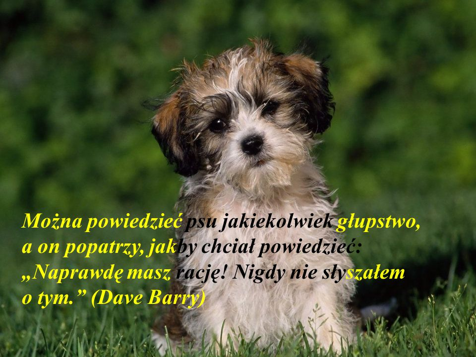 """Można powiedzieć psu jakiekolwiek głupstwo, a on popatrzy, jakby chciał powiedzieć: """"Naprawdę masz rację."""
