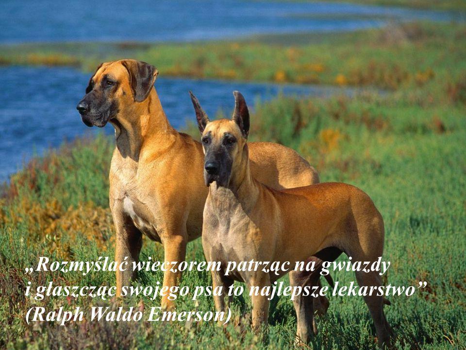 """""""Rozmyślać wieczorem patrząc na gwiazdy i głaszcząc swojego psa to najlepsze lekarstwo (Ralph Waldo Emerson)"""