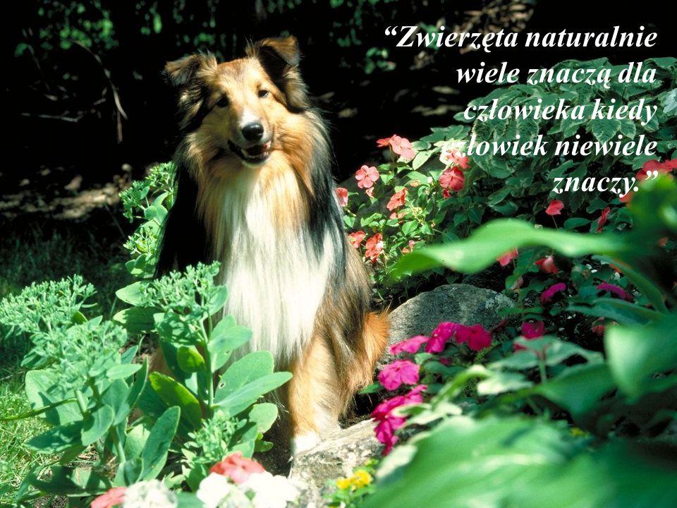 Zwierzęta naturalnie wiele znaczą dla człowieka kiedy człowiek niewiele znaczy.