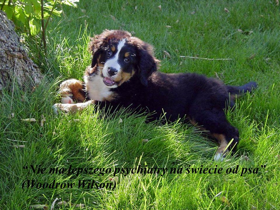 Nie ma lepszego psychiatry na świecie od psa (Woodrow Wilson)