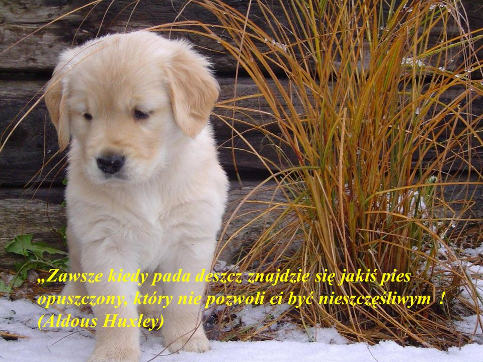 """""""Zawsze kiedy pada deszcz znajdzie się jakiś pies opuszczony, który nie pozwoli ci być nieszczęśliwym ."""