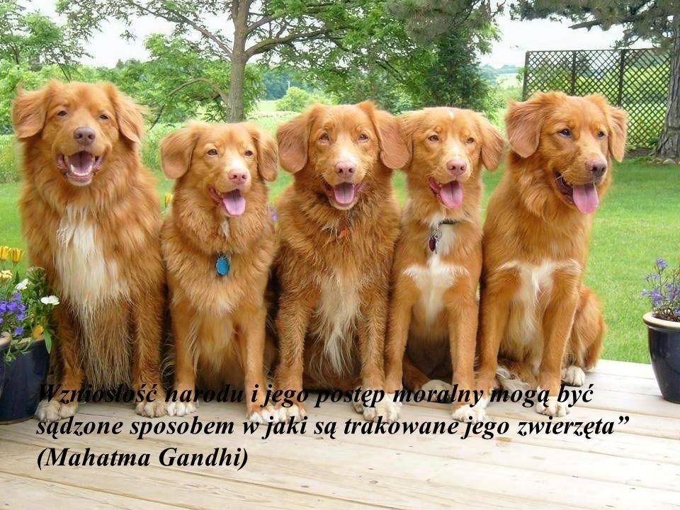 Wzniosłość narodu i jego postęp moralny mogą być sądzone sposobem w jaki są trakowane jego zwierzęta (Mahatma Gandhi)