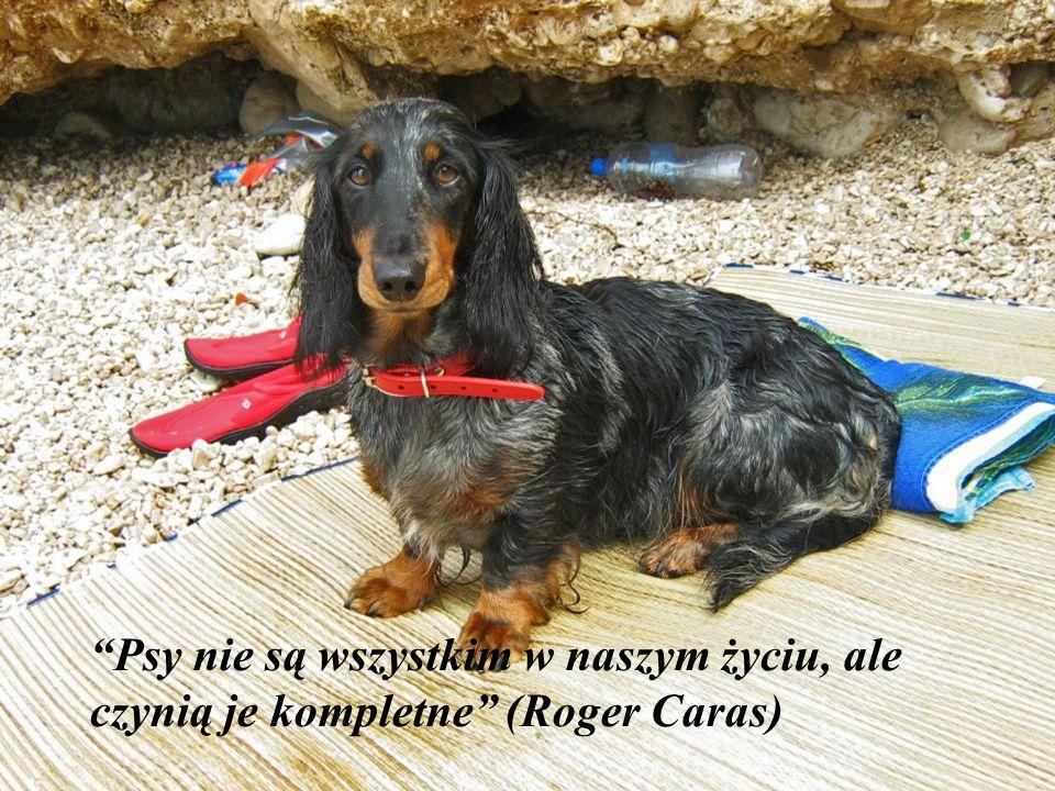 Psy nie są wszystkim w naszym życiu, ale czynią je kompletne (Roger Caras)