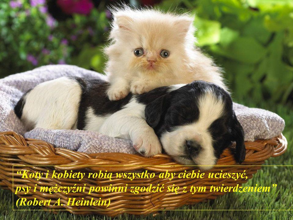 Koty i kobiety robią wszystko aby ciebie ucieszyć, psy i mężczyźni powinni zgodzić się z tym twierdzeniem (Robert A.