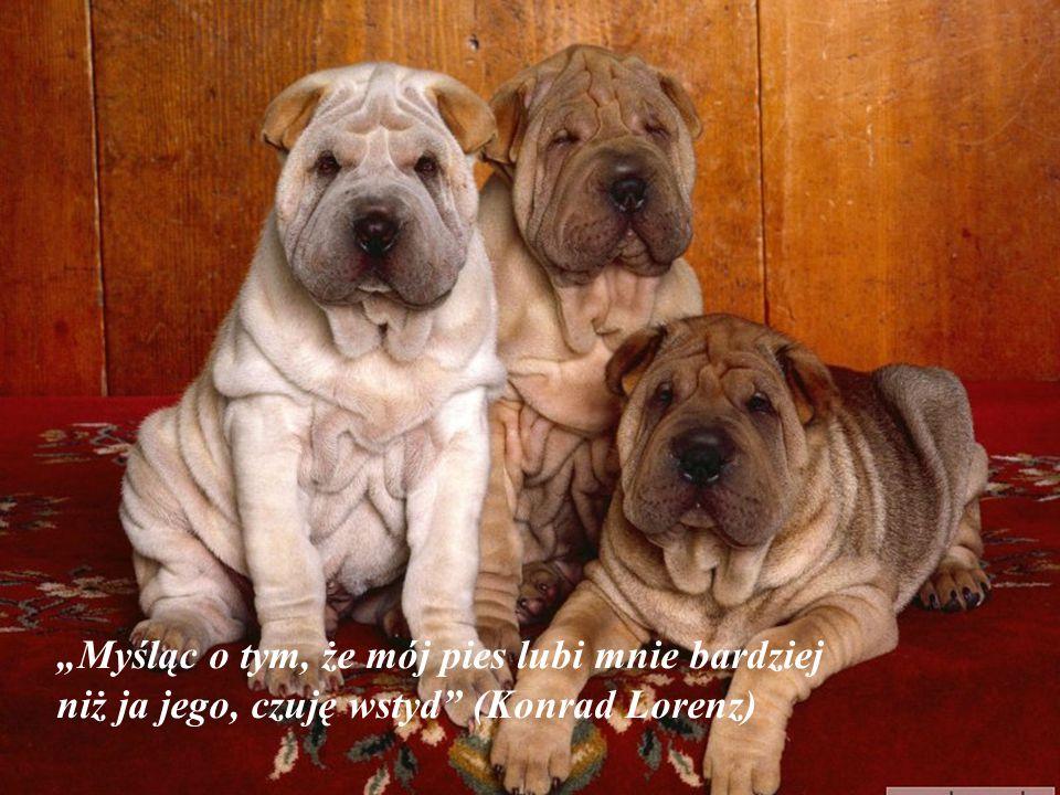 """""""Myśląc o tym, że mój pies lubi mnie bardziej niż ja jego, czuję wstyd (Konrad Lorenz)"""
