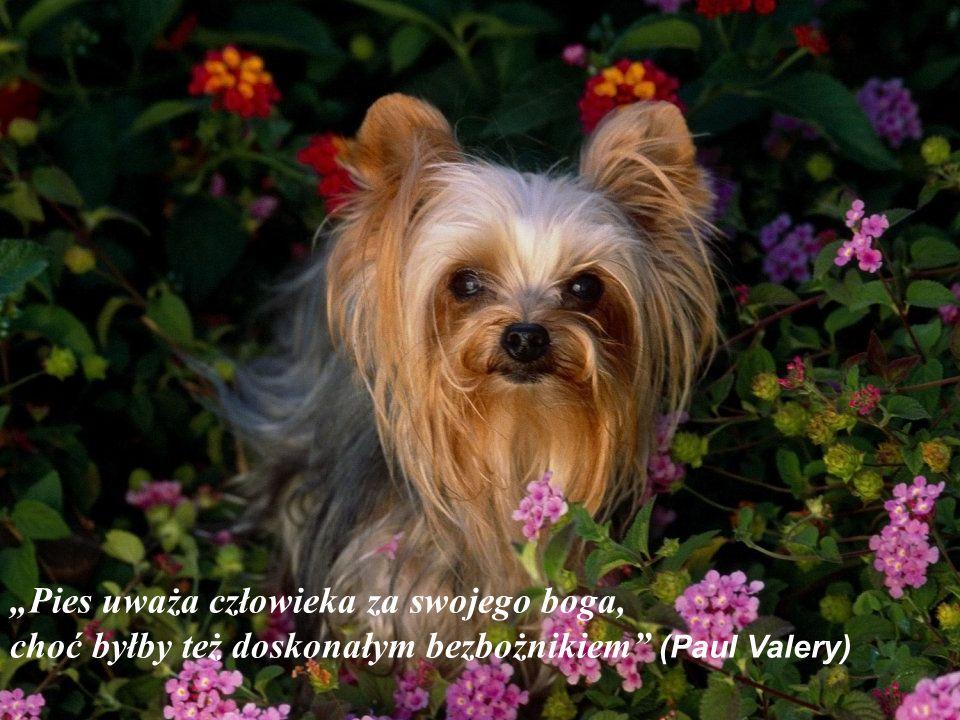"""""""Pies uważa człowieka za swojego boga, choć byłby też doskonałym bezbożnikiem (Paul Valery)"""