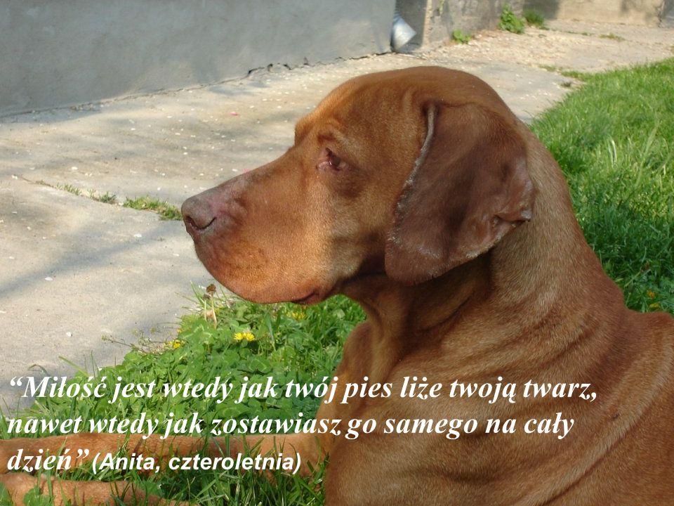 Miłość jest wtedy jak twój pies liże twoją twarz, nawet wtedy jak zostawiasz go samego na cały dzień (Anita, czteroletnia)