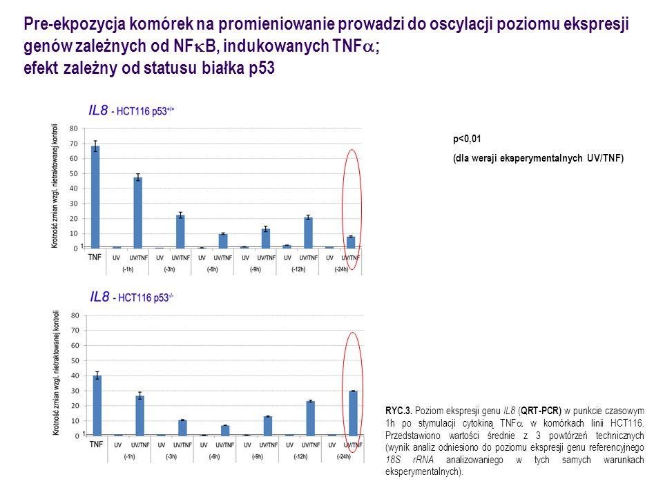 efekt zależny od statusu białka p53