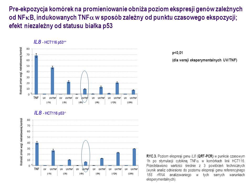 efekt niezależny od statusu białka p53