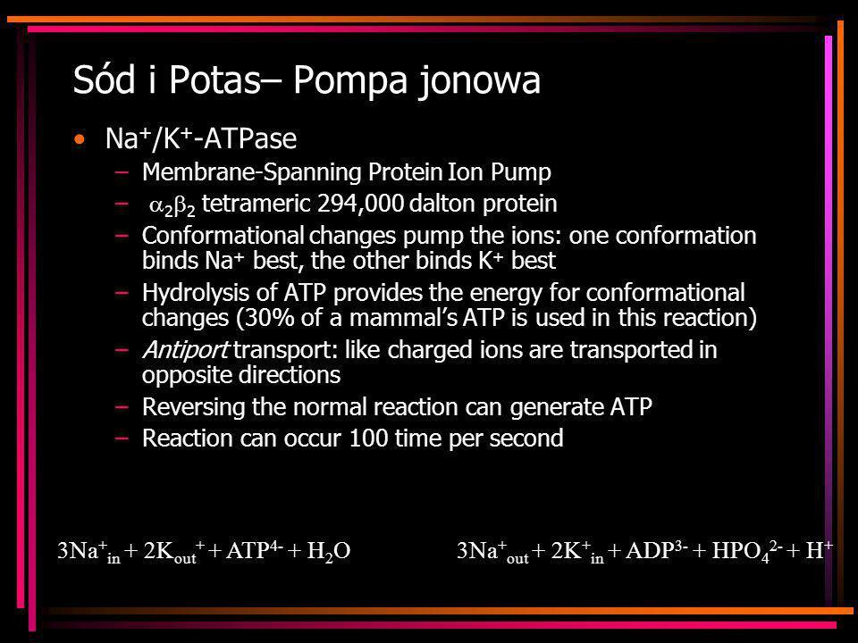 Sód i Potas– Pompa jonowa