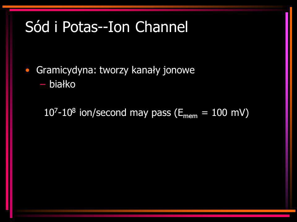 Sód i Potas--Ion Channel