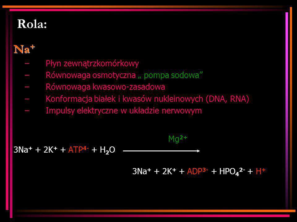 """Rola: Na+ Płyn zewnątrzkomórkowy Równowaga osmotyczna """" pompa sodowa"""
